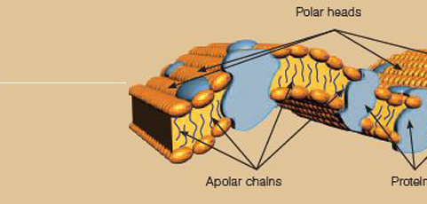 THE BIOLOGICAL EFFECTS OF POLARIZED LIGHT